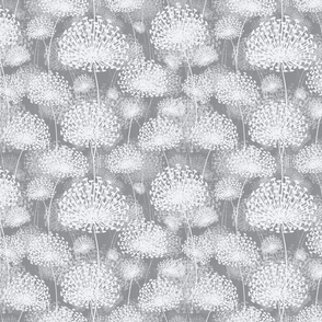 gray Dandelions 25