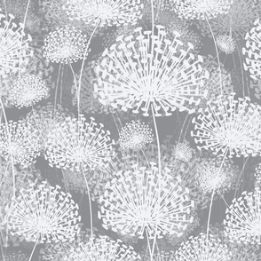 gray Dandelions 50
