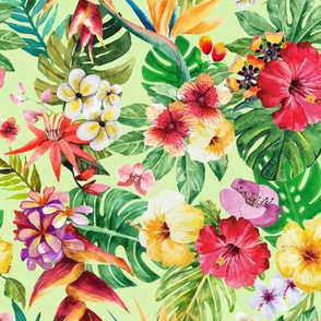Tropical big flowers pastel green background