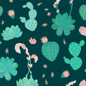 Succulents on Teal