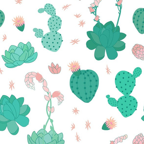 Succulents on White