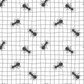 Ant insects on a grid paper