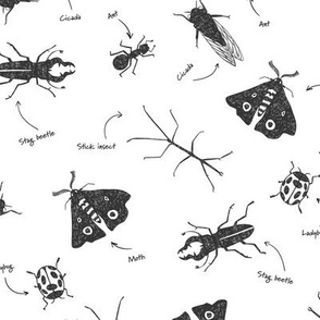 Insect pattern on white