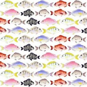 7 Porgy fish