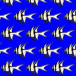 Banggai Cardinalfish on dark blue