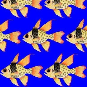 Pajama Cardinalfish on deep blue
