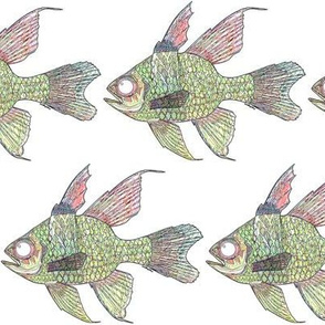 Pajama Cardinalfish as lines