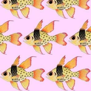 Pajama Cardinalfish on pink