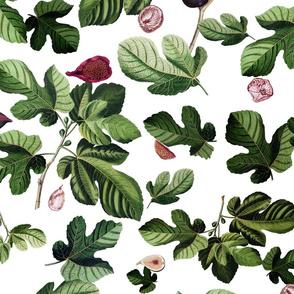Figs white