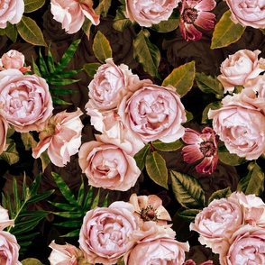 Aromatherapy - Smelling Pink Roses on Black