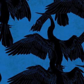 Dark blue Elegant darter