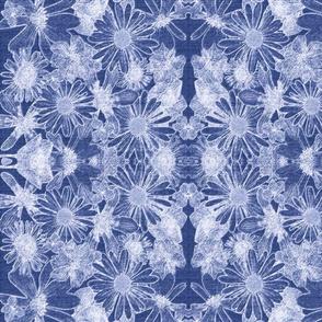 daisys indigo