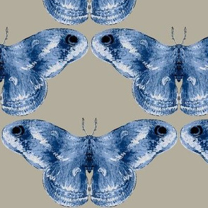Rich Blue Mystic Moth on Gray Area Background