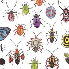 Rainforest Beetles