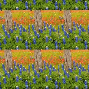 Texas Bluebonnets-ed