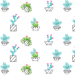 Catcuses in flower pots