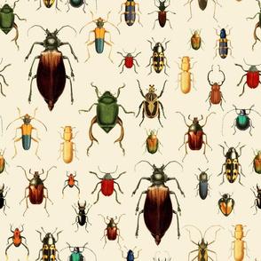 "12""  Vintage Beetles and Bugs on beige cream"