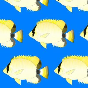 Reef ButterflyFish on sea blue