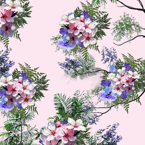 Pink_purple_jacaranda flowers in trees