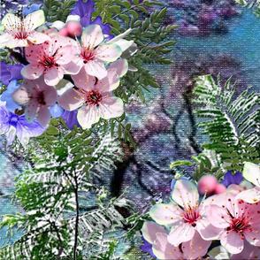 dark blue sky Large _jacaranda tree flowers