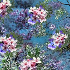 dark bue sky S _jacaranda tree flowers