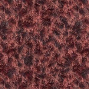 Chocolate Labradoodle Fur