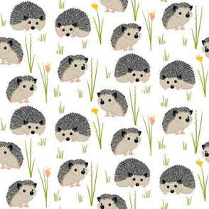 Hedgehogs and Flowers