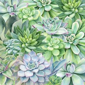 succulent repeat