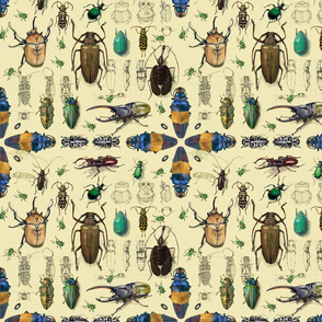 Beetles with cream background