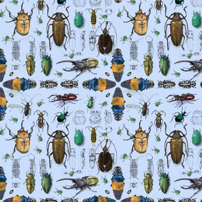 Beetles with blue background