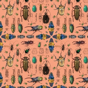 Beetles with coral background