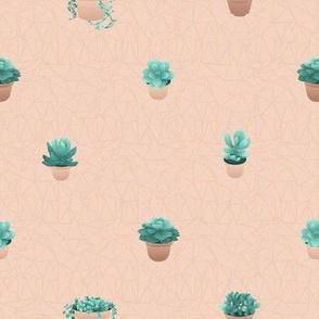 Succulents in diagonal line, dusty rose