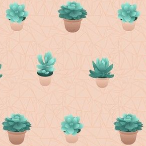 Succulents in lined pots, dusty rose
