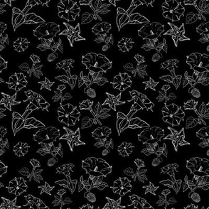 datura blooms in black
