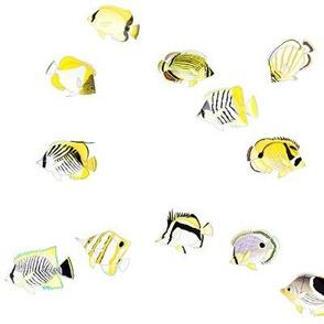 Twelve Butterflyfish Scatter