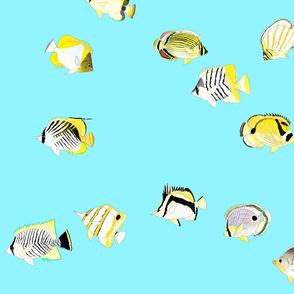 Twelve Butterflyfish Scatter on light blue