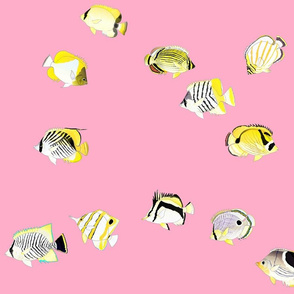 Twelve Butterflyfish Scatter on pink
