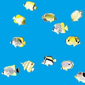 Twelve Butterflyfish Scatter on sea blue