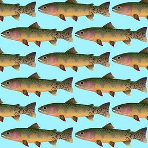 Cutthroat Trout on light blue