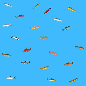 World of Trout and Salmon on sea blue