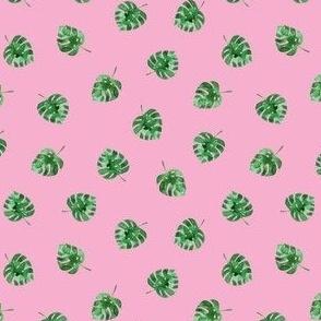 Monstera leaves on pink