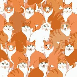 Hundreds of Ginger Cats