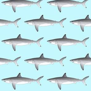 Great White Shark v2020 light blue