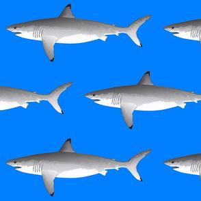 Great White Shark 2020  on sea blue