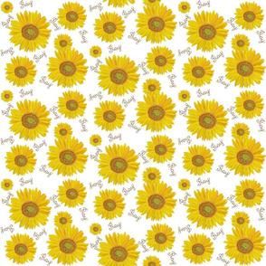 Sunflower pray on white small