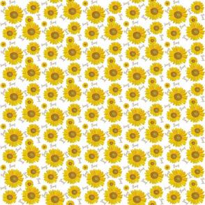 Sunflower pray on white xs