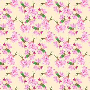 Plum blossoms med
