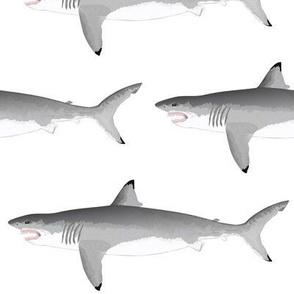 Biting Great White Shark 2020