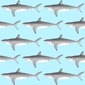 Biting Great White Shark on light blue