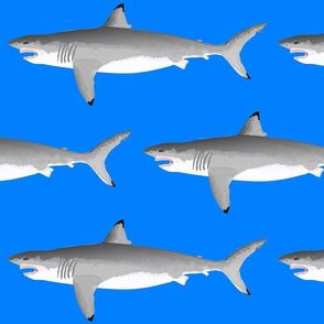 Biting Great White Shark on sea blue